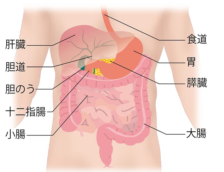 痛み 胆嚢 ポリープ